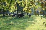 Parc du heron